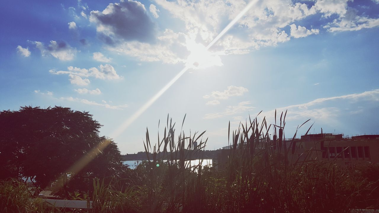 sun, sky, sunlight, nature, outdoors, beauty in nature, no people, growth, day, scenics, built structure, architecture, tree, building exterior