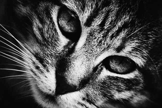 Monochrome Photography Black And White Cat Photography Cat Watching Cats Of EyeEm Cateyes