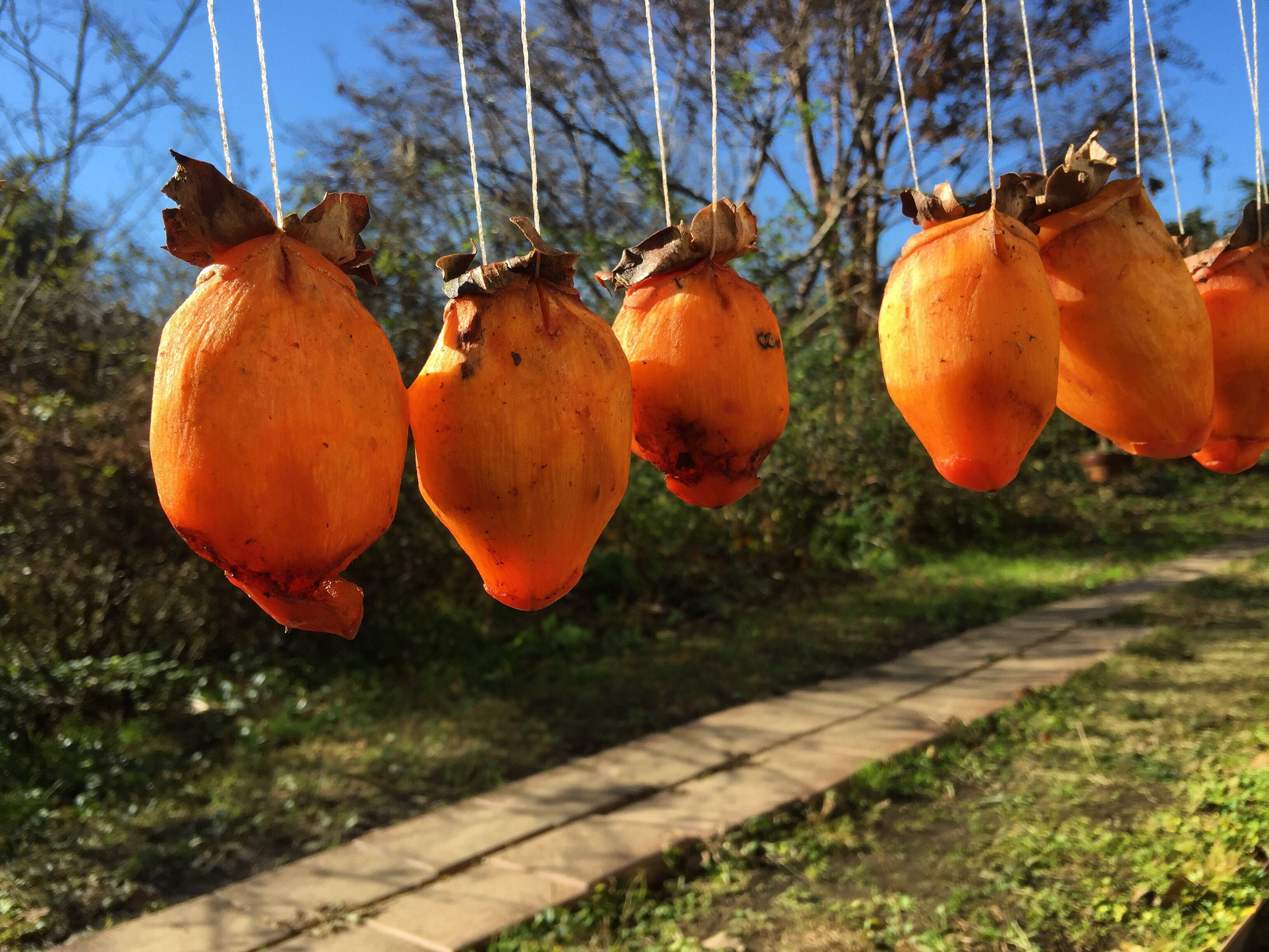 tree, fruit, focus on foreground, orange color, growth, nature, hanging, sunlight, outdoors, food and drink, persimmon, freshness, no people, day, food, close-up, sky