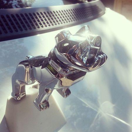 Mactruck Bulldog Hoodornament on a Smartcar shiny dog car
