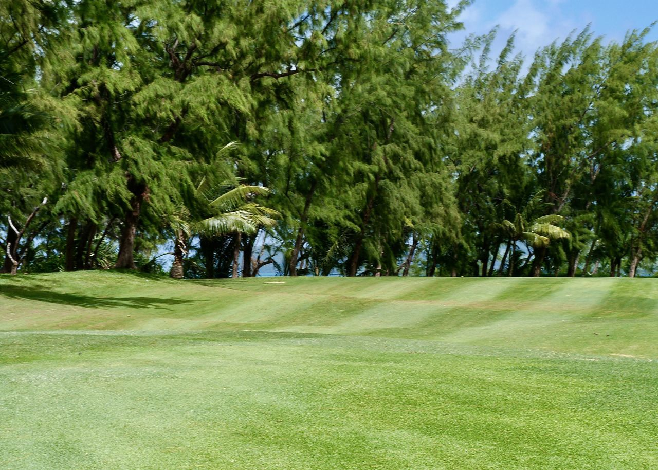 fairway on links golf course, mauritius Beauty In Nature Color Design Environment Fairway Golf Golf Course Grass Green Green Color Greenery Growth Indian Ocean Lawn Mauritius Natural Pattern Nature Outdoors Sea Seaside Sky Sport Tree Tropical Climate Île Aux Cerfs