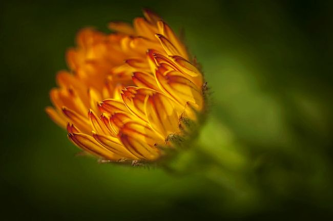 Taking Photos Nature_collection Macro Nature OpenEdit Popular Photos Flowers_collection Flowers,Plants & Garden Spring Into Spring Macro_collection Macro Photography