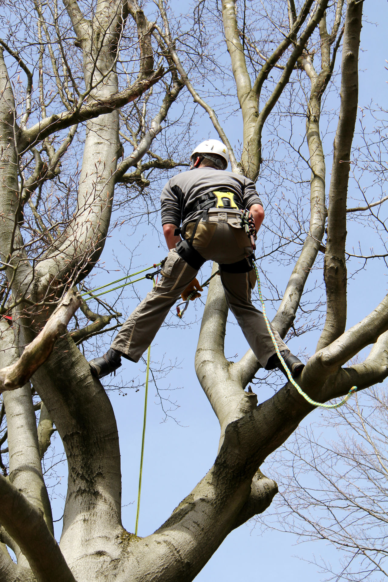 Aborist Adventure Animal Themes Arborist Balance Casual Clothing Cold Day Focus On Foreground Freeclimbing Front View Full Length Holding One Animal Outdoors Real People Saw Side View Sitting Standing Tree TreePorn Winter Young Men Zoology