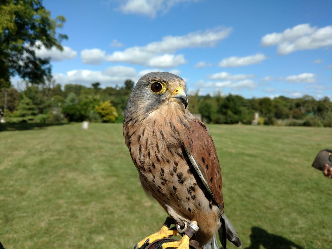 Beautiful stock photos of eule,  Animal Wildlife,  Animals In The Wild,  Bird,  Bird Of Prey