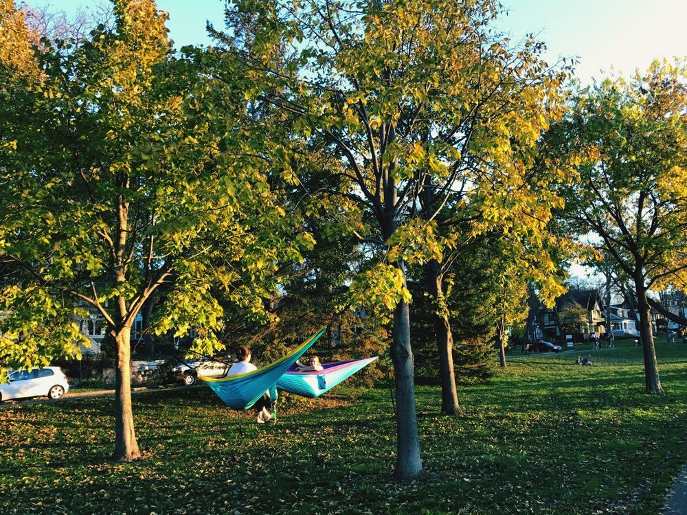 Tree Nature Green Color Growth Friends Chatting Leisurely In Hammock Leisure Time Weekends Mode Park Trees Beauty In Nature Grass Outdoors Tranquility Day Hammock Scenics