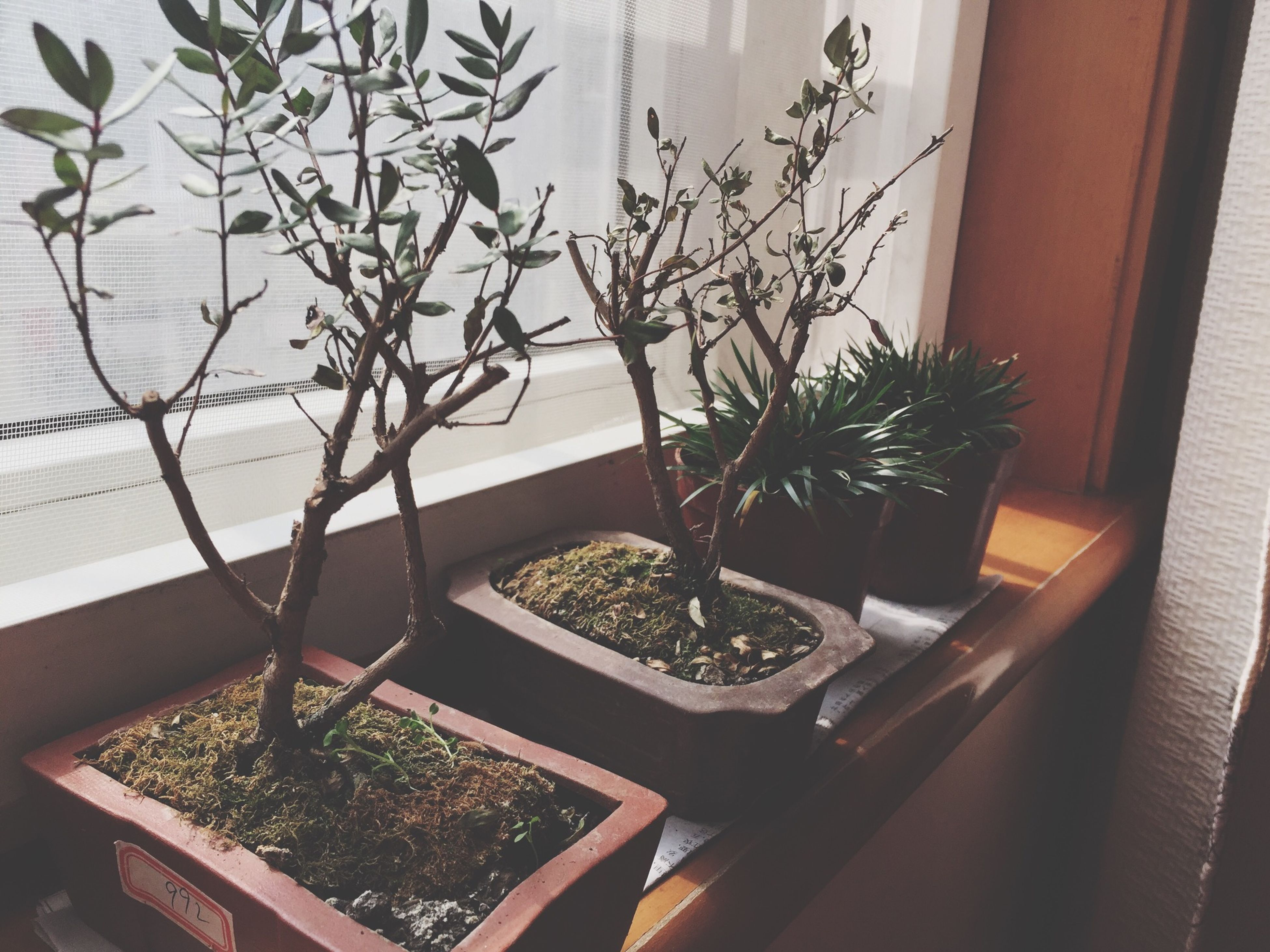 potted plant, indoors, plant, window, growth, table, leaf, house, built structure, window sill, architecture, home interior, pot plant, glass - material, flower pot, no people, day, nature, flower, transparent