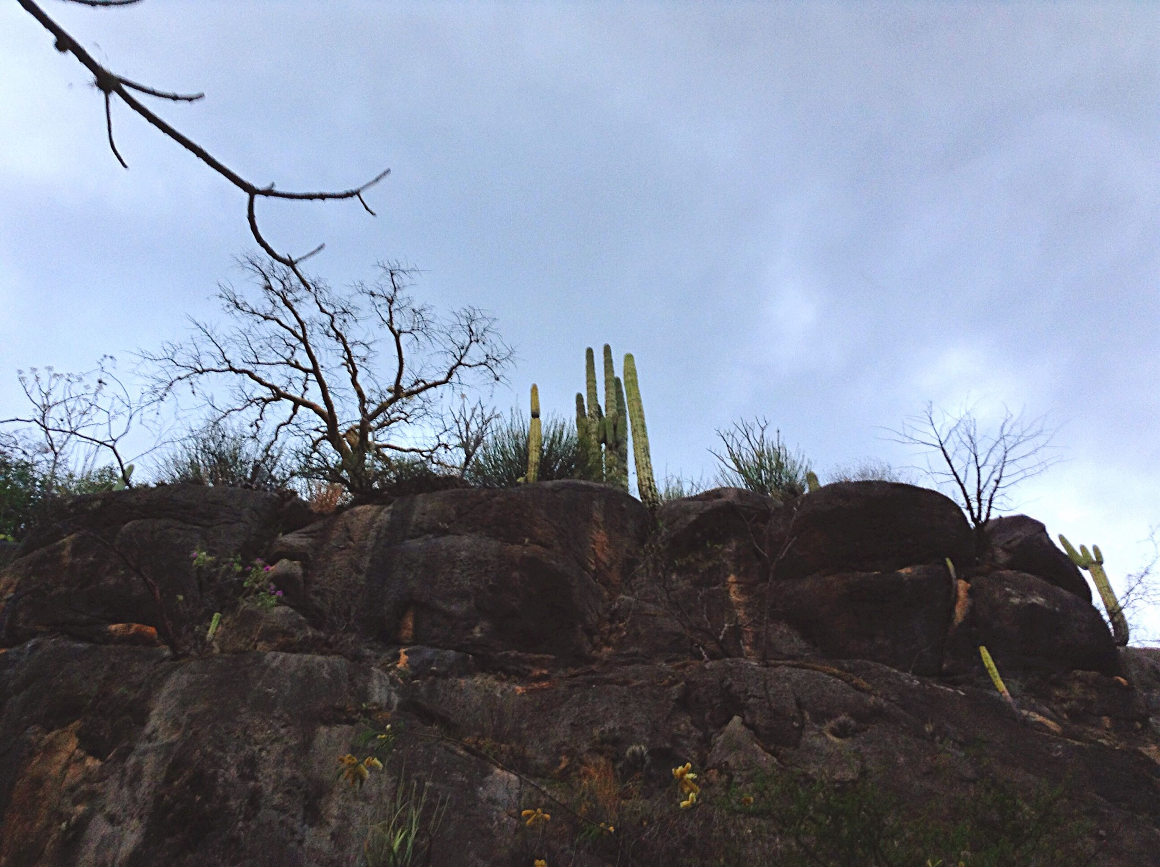 sky, tree, bare tree, low angle view, tranquility, cloud - sky, nature, tranquil scene, branch, cloud, landscape, rock - object, rock formation, scenics, growth, non-urban scene, day, beauty in nature, outdoors, no people