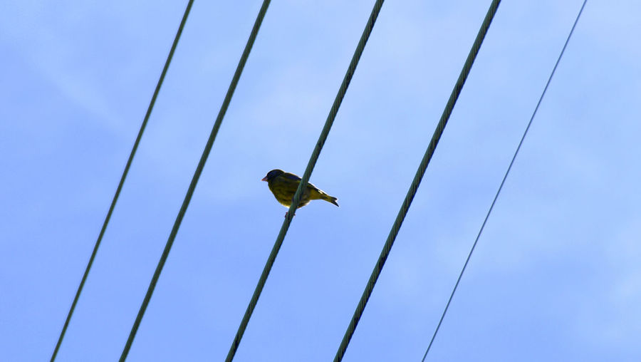 Low Angle View Blue Flying Sky Work Tool Technology Industry Outdoors Day Bird Clear Sky Manual Worker Close-up People Le Var Unclicheunclindoeil Nature The Great Outdoors - 2017 EyeEm Awards