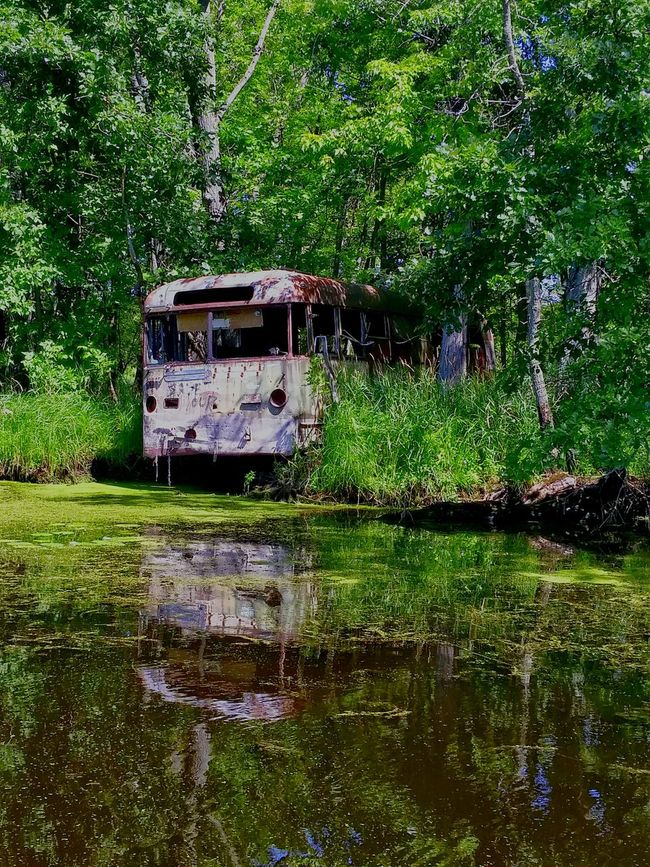 Late for the bus. Water Scape Rusting Bus Swampy  Creepy Nature Wolf River