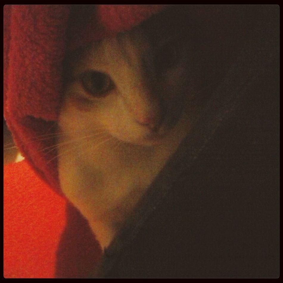 Cat♡ Cat Game Cache-cache
