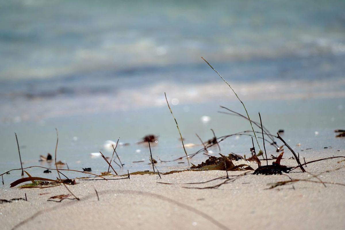 EyeEm Selects Weeds grow everywhere Nature Outdoors Beach Water Beachphotography Seagreen Perth Western Australia Ocean shoreline Shoreline