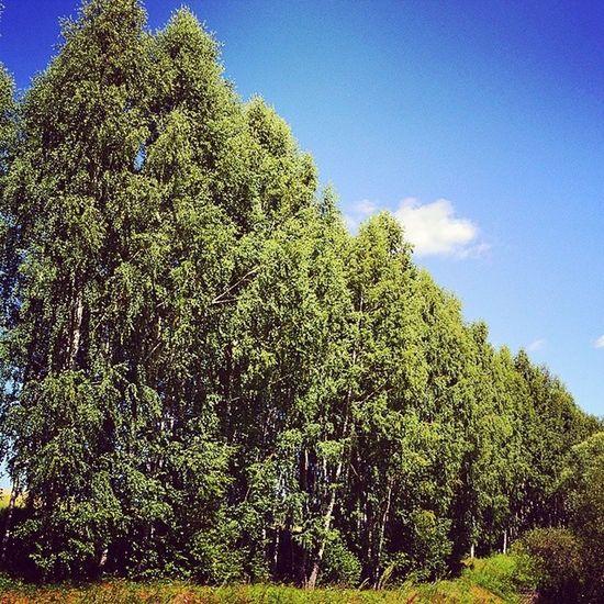татарстан Beautifulrussia Tatarstan хасаншаих sky summer