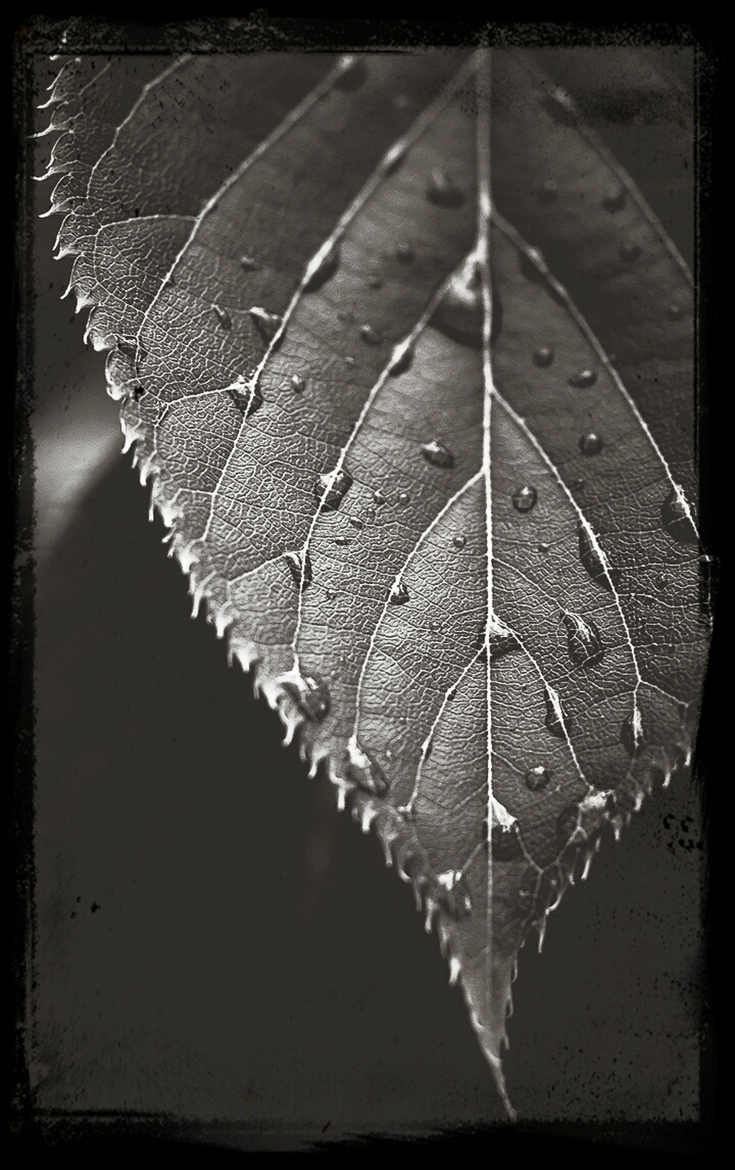 water, drop, close-up, wet, transfer print, auto post production filter, leaf, pattern, fragility, high angle view, nature, rain, raindrop, natural pattern, no people, dew, focus on foreground, reflection, outdoors, leaf vein