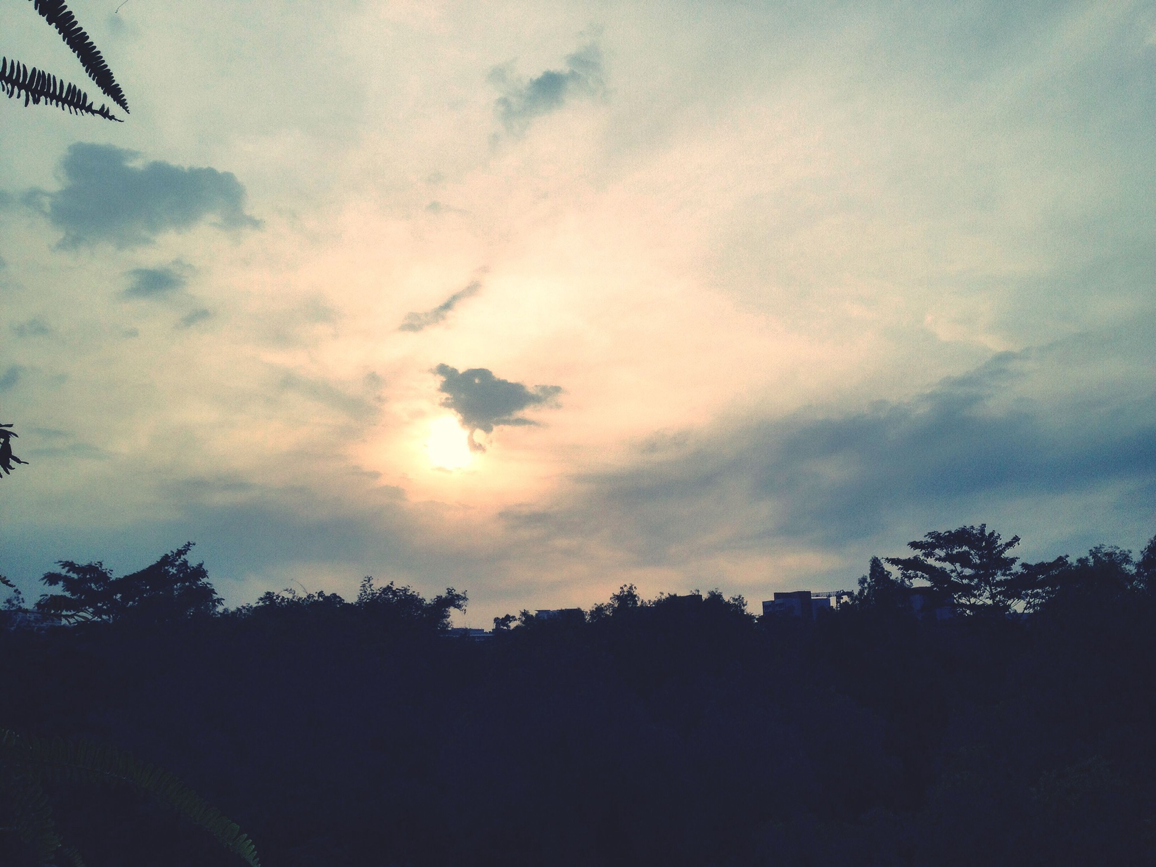 flying, sky, tree, silhouette, bird, cloud - sky, low angle view, mid-air, nature, animal themes, beauty in nature, cloudy, scenics, tranquility, sunset, cloud, tranquil scene, animals in the wild, wildlife, outdoors