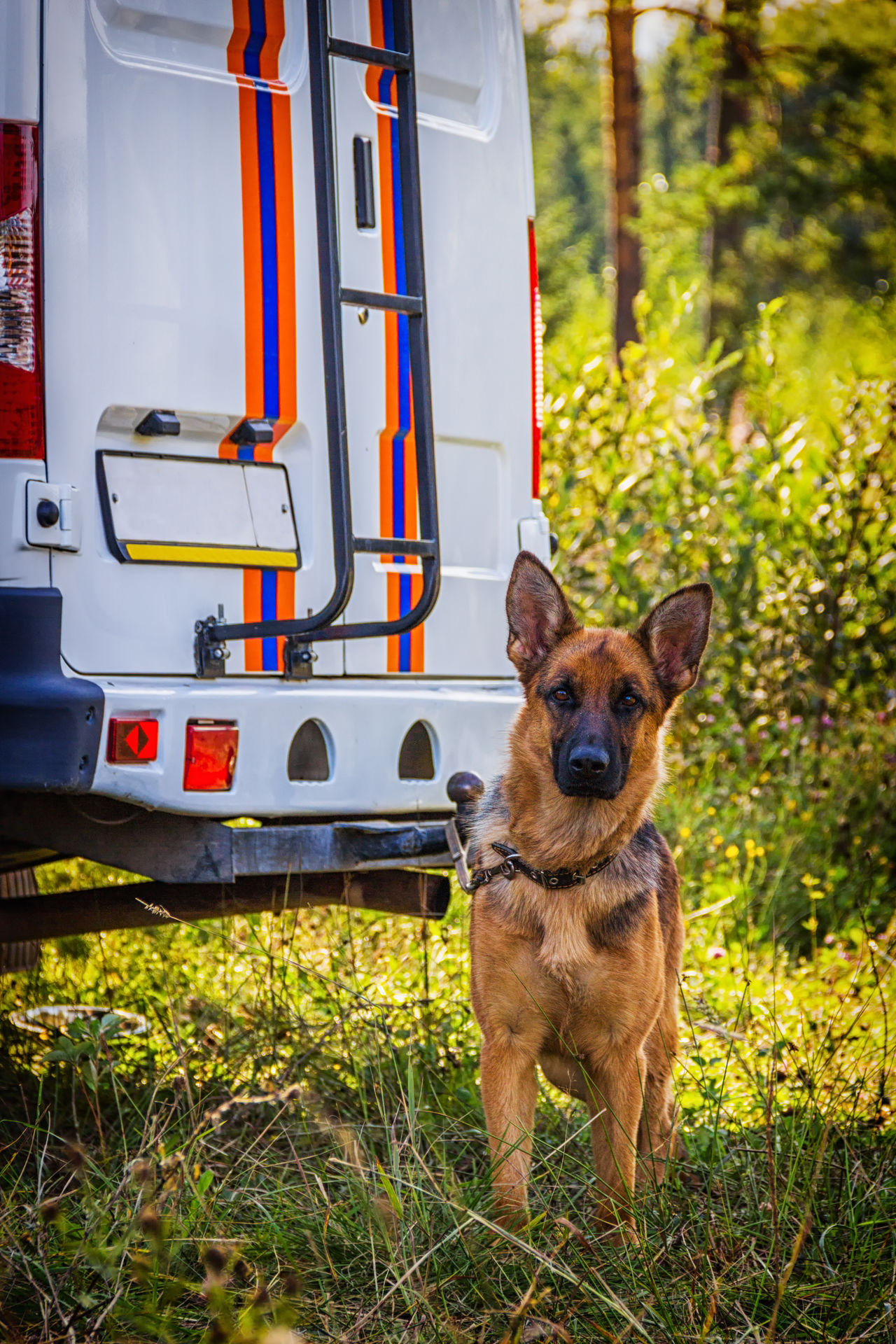 Dog service of EMERCOM of Russia. A rescue dog. The dog resting after a search for the missing in the forest of man. Animal Themes Day Dog Domestic Animals Emercom Grass Mammal Nature No People One Animal Outdoors Pets Rescue Rescuedog Russia
