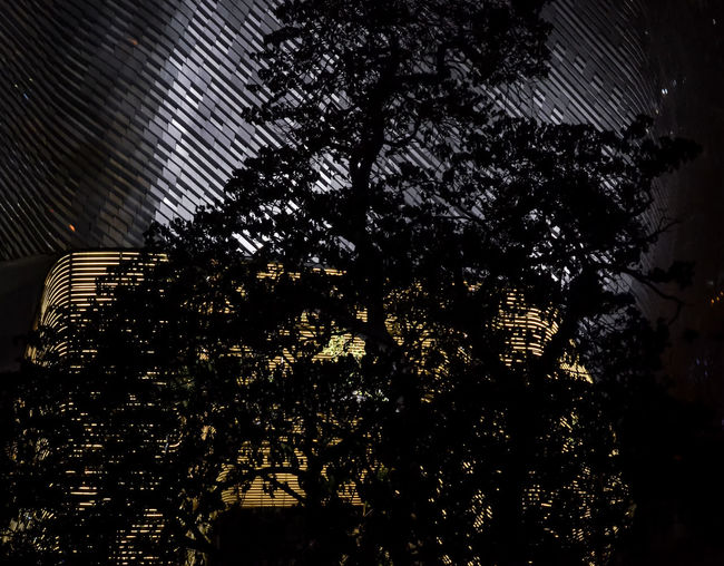 Silhouette of tree with facade lighting background Abstract Backgrounds Beauty In Nature City Life Dark Facade Building Facade Lighting Façade Garden Growth Nature Nature Night No People Outdoors Silhouette Tree Tree