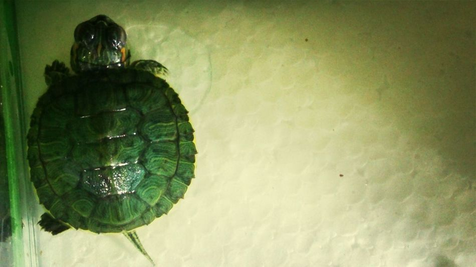 i'd like to be alone for now, please. ktnxbai. . Pets My Turtle