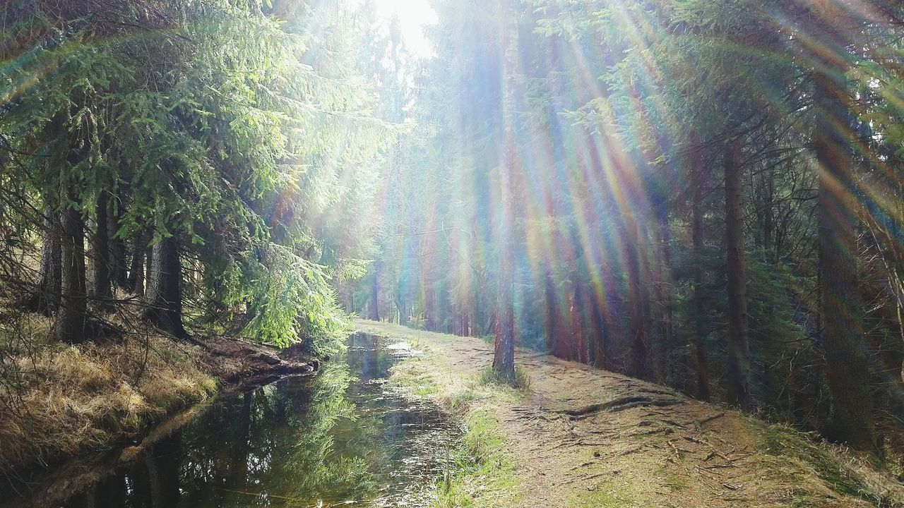 Czech Nature Krusnehory Spring Forestwalk In The Forest Sunlight Through Trees Sunshine Day Bourn