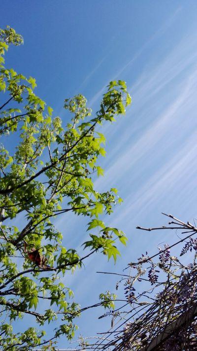 Morón Nature Outdoors Buenosairesphoto Clear Sky TreePorn Cloud - Sky