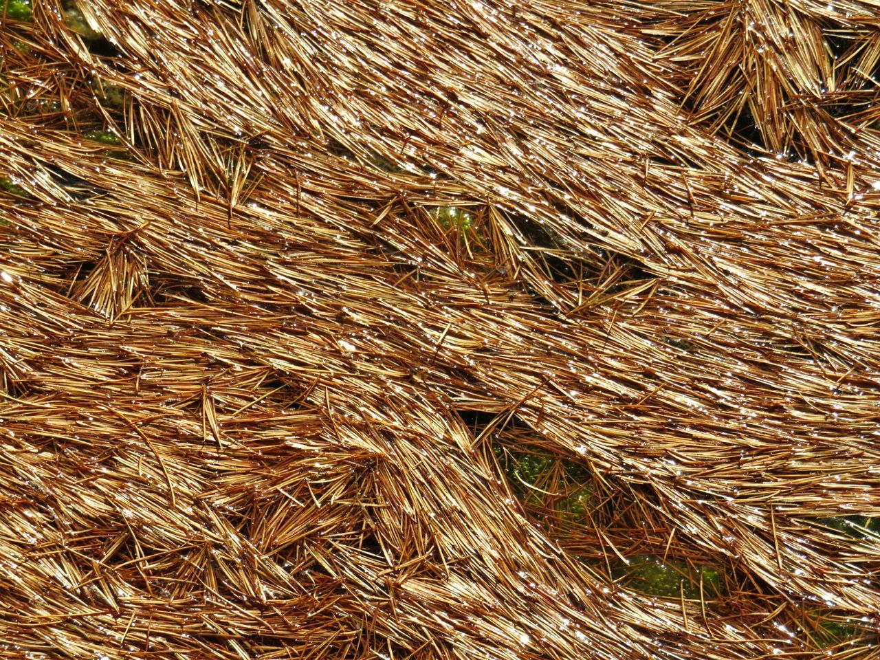 full frame, backgrounds, hay, agriculture, no people, straw, field, brown, day, outdoors, hay bale, nature, haystack, wheat, cereal plant, close-up