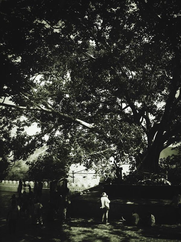 Journeyman Dambulla Sri Lanka Bodhitree On The Way