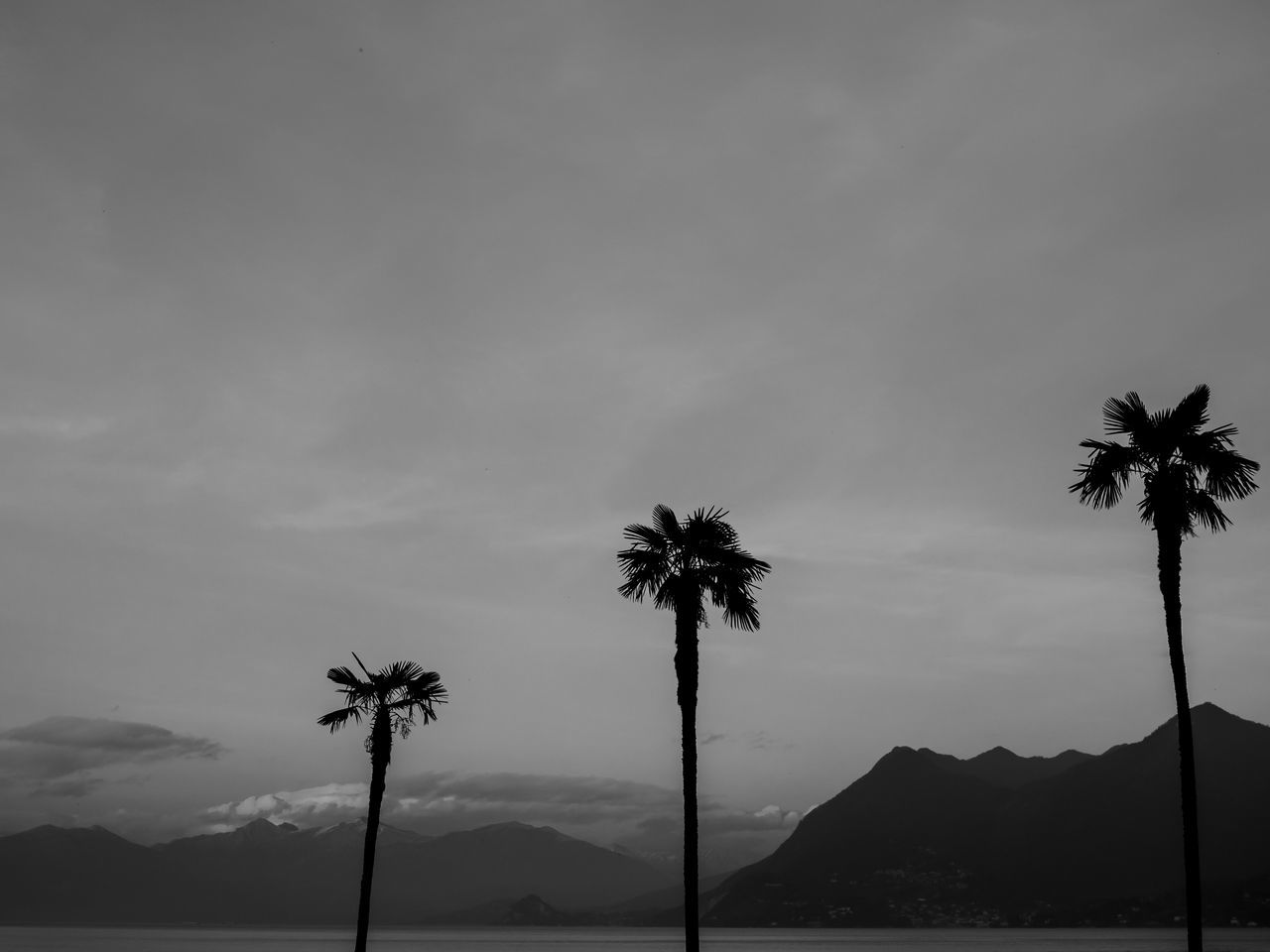 Lake view. Beauty In Nature Black & White Black And White Black And White Photography Blackandwhite Blackandwhite Photography Cloud - Sky Day Growth Lake Lake View Low Angle View Mountain Mountains Nature No People Outdoors Palm Tree Scenics Sky Tranquility Tree Tree Trunk
