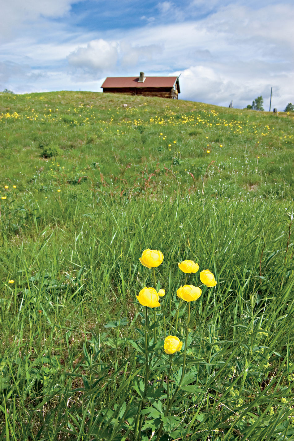 A Fornlorn House On A Hill A House On A Hill Beauty In Nature Day Field Finland Summer Flower Globeflowers In Lappland Green Color Landscape Lappland Nature No People Outdoors Scenics Sky Summer In Lappland Tranquil Scene Tranquility