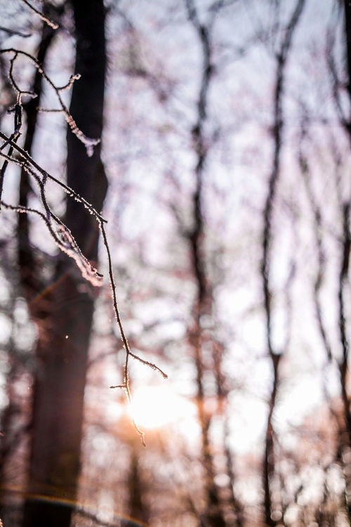 Close-up Cold Cold Temperature Frost Ice Nature Outdoors Sky Snow Sun Tree White