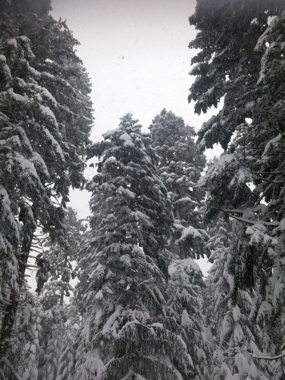 Bare Tree Cold Cold Temperature Covering Day Forest Geology Nature Outdoors Physical Geography Rough Season  Snow Tranquil Scene Tranquility Tree Tree Trunk Weather Winter