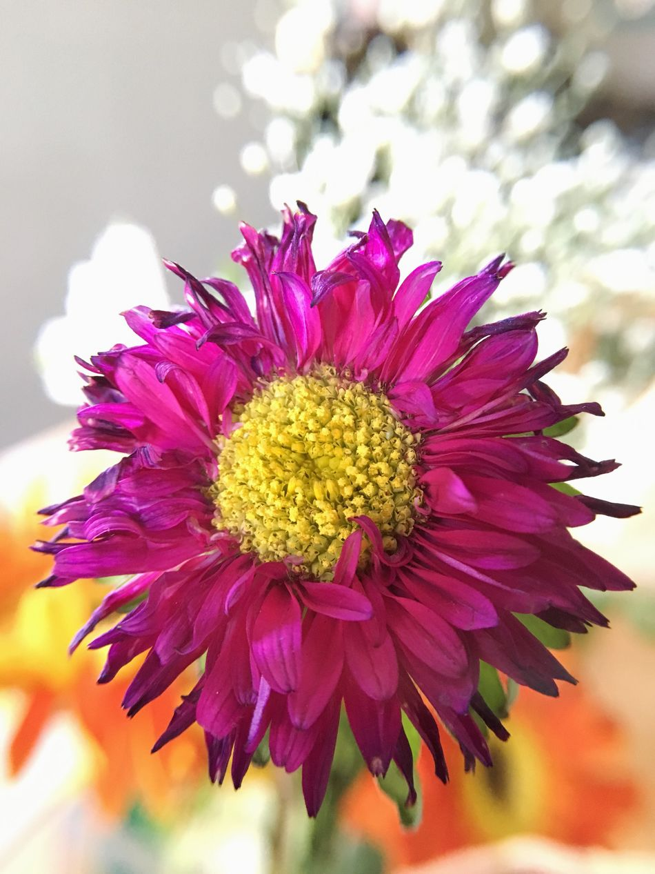 Flower Fragility Freshness Flower Head Petal Nature Beauty In Nature Focus On Foreground Growth Close-up Pollen No People Plant Blooming Day Outdoors Purple Purple Flower Bouquet Bouquet Of Flowers Flower Vase Macro Wilting Death Decay