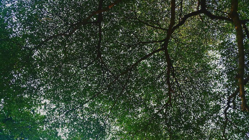 Q Tree