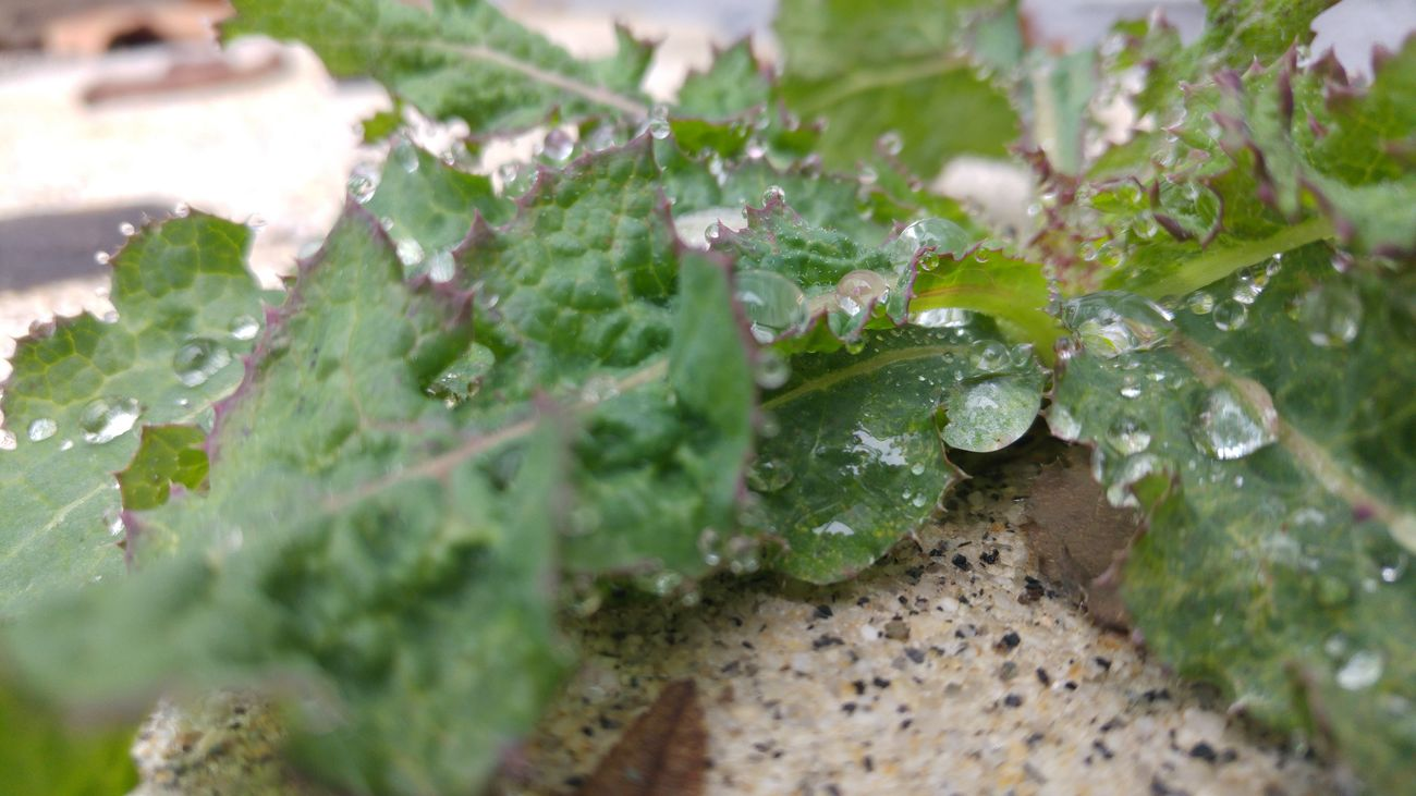 Close-up Day Drop Freshness Green Color Growth Leaf Nature No People Outdoors Plant Water Wet