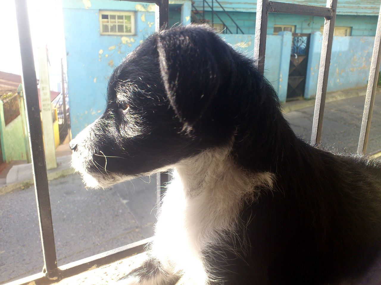 Dog Babydog Dog❤ Doglover Sun Sunlight Relax Valparaíso Chile Cerro Las Monjas Beatifull