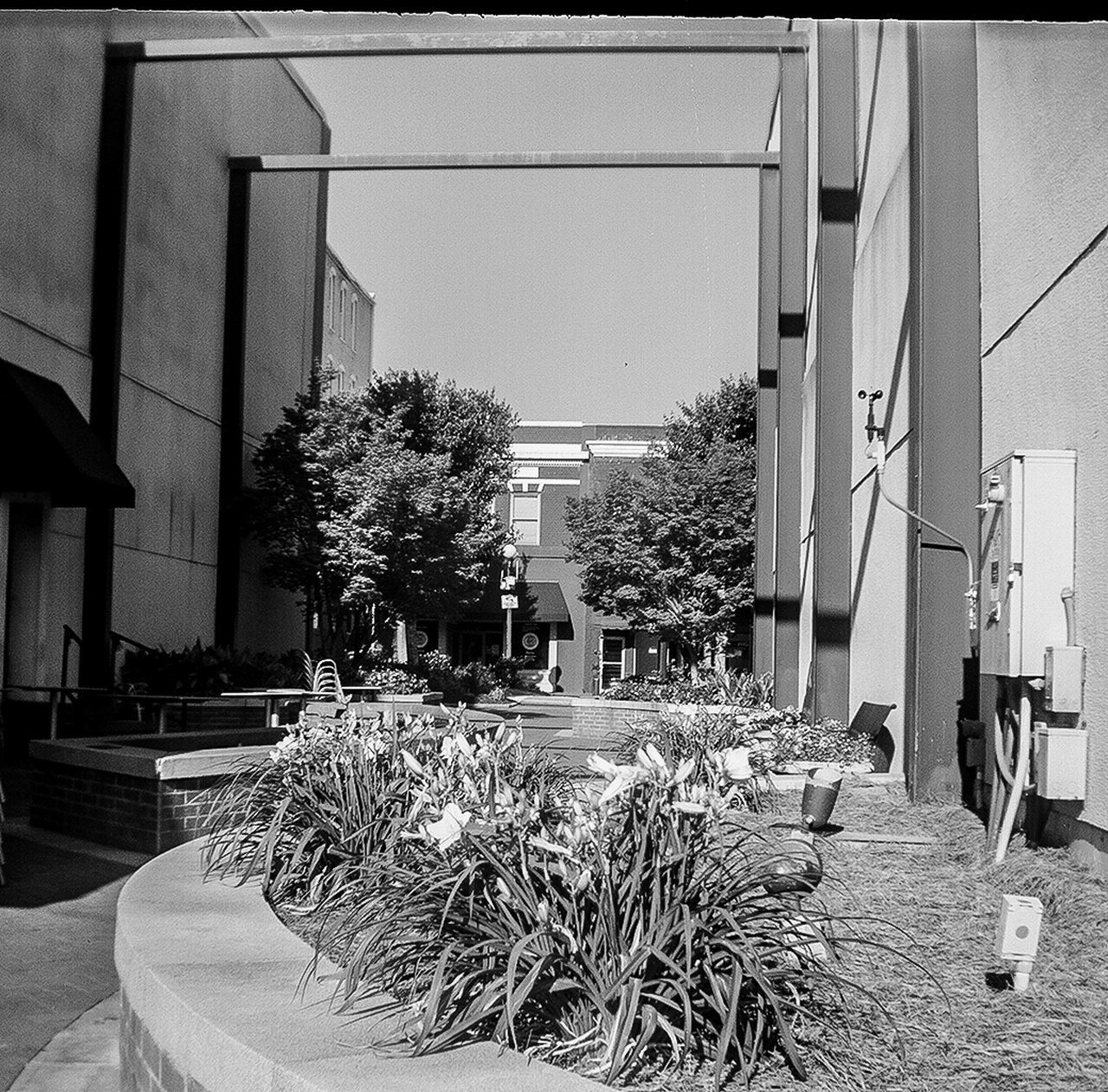 Architecture Blackandwhite Building Exterior Built Structure City Clear Sky Day Eye4photography  Film Photography Kodakbrownie Nature No People Outdoors Plant Sky Tree