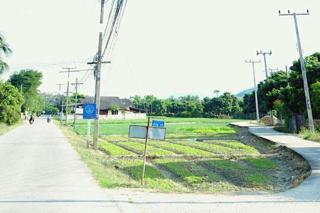 Lamphun Lamphun ,Thailand LamphunProvince Lumpoon ลำพูน ป่าซาง Thailand