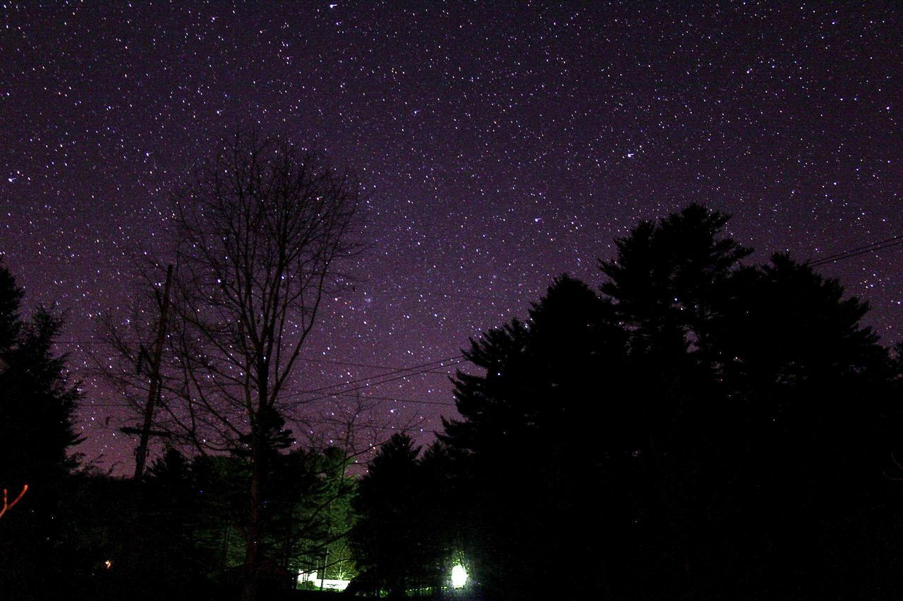 Night sky Star - Space Night Astronomy Tree Milky Way Space And Astronomy Constellation Galaxy Star Field Dark Sky Nature Scenics Space Beauty In Nature Low Angle View No People Pine Tree Silhouette Forest Arts Culture And Entertainment Canon70d Canon Fineart_photo Canonphotography