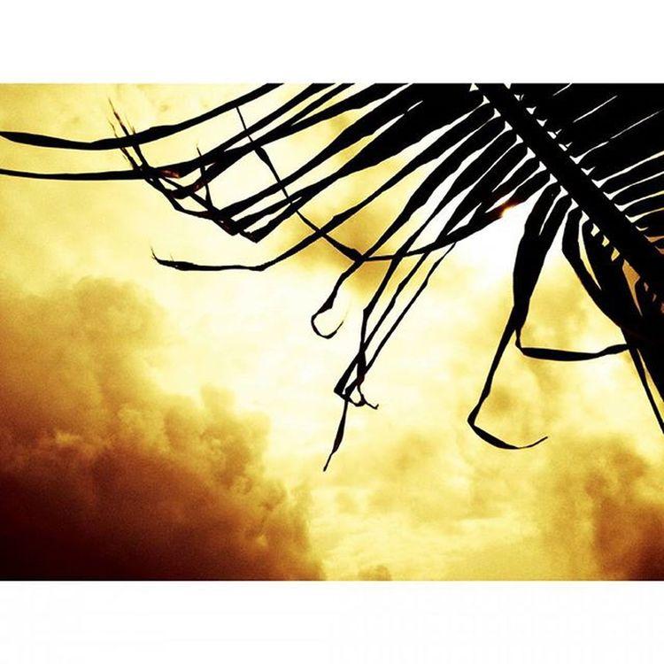 Sunsets & palm trees 😊😍🌞🌴 Sunset Palmtress Sun Sunshine Treesandsky Trees Mumbaiinstagrammers MalabarHill Malabarhills Things2doinmumbai Mumbai Life Nature Lover Cloudporn Clouds Skyporn Sky Silhouette Shades Silhouettegrams