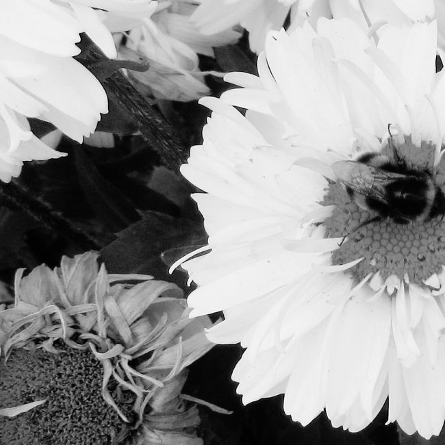 Bee And Flower Nature Flowers And Insects Black And White Love To Take Photos ❤