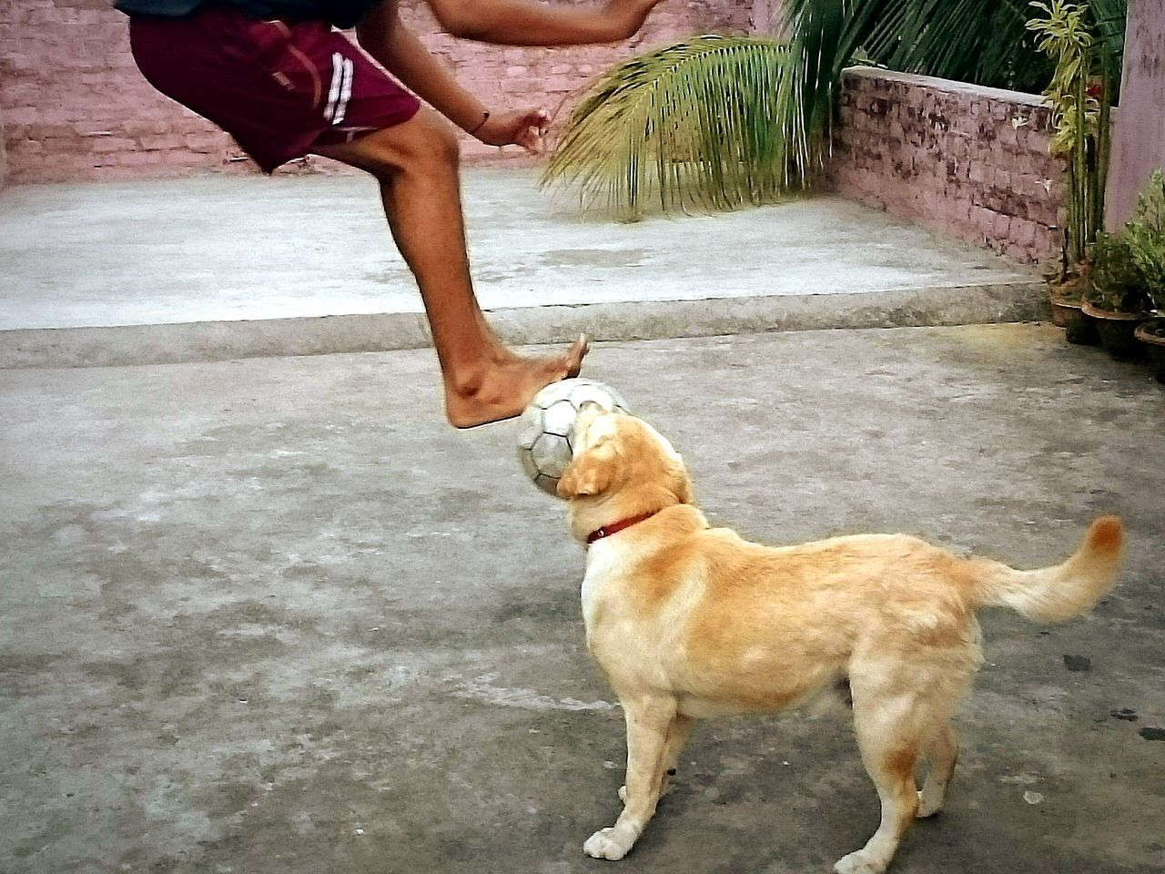 Showing Imperfection Boy Playing Football With His Pet Petlove  LabradorLove Homefootball Imperfection Imperfectly Perfect Imperfection Is Beauty Simple Photography Imperfection ❤