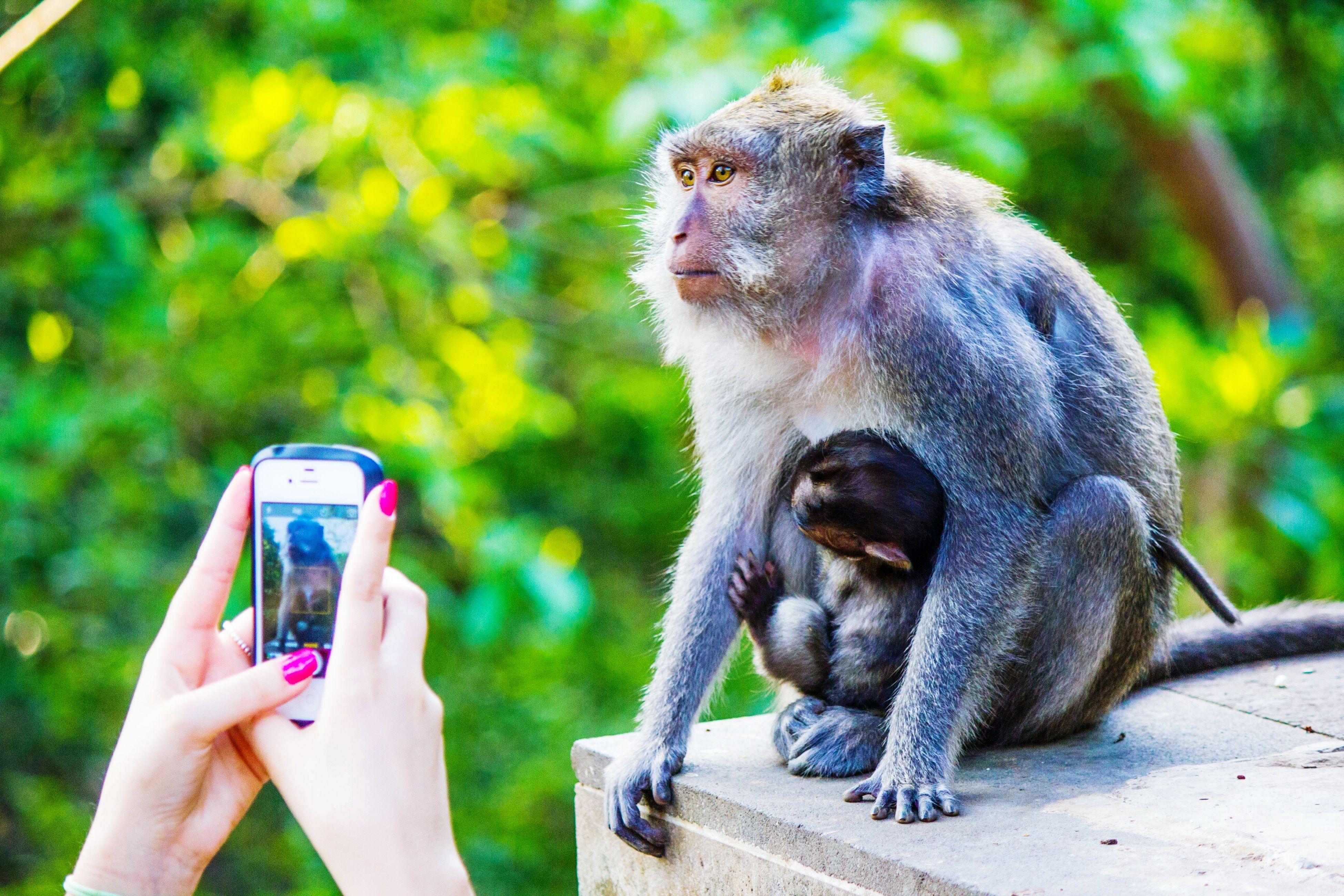 Photography Monkey Forest INDONESIA Ubud, Bali Monkey Forest Ubud