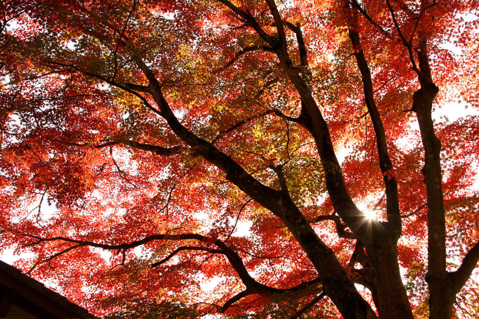 EyeEm Nature Lover Nature_collection Red Autumn Leaves Tadaa Community