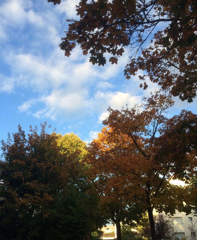 Autumn Trees Sky Low Angle View Nature Outdoors Beauty In Nature No People Cloud - Sky