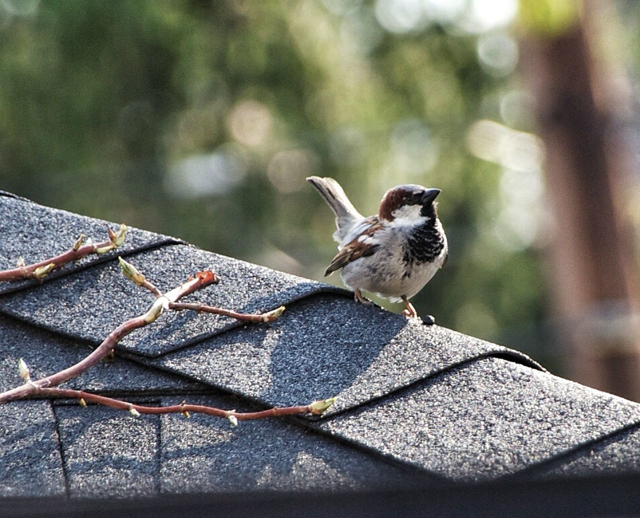 one animal, animal themes, animals in the wild, day, animal wildlife, bird, outdoors, no people, focus on foreground, perching, nature, close-up, sparrow, mammal