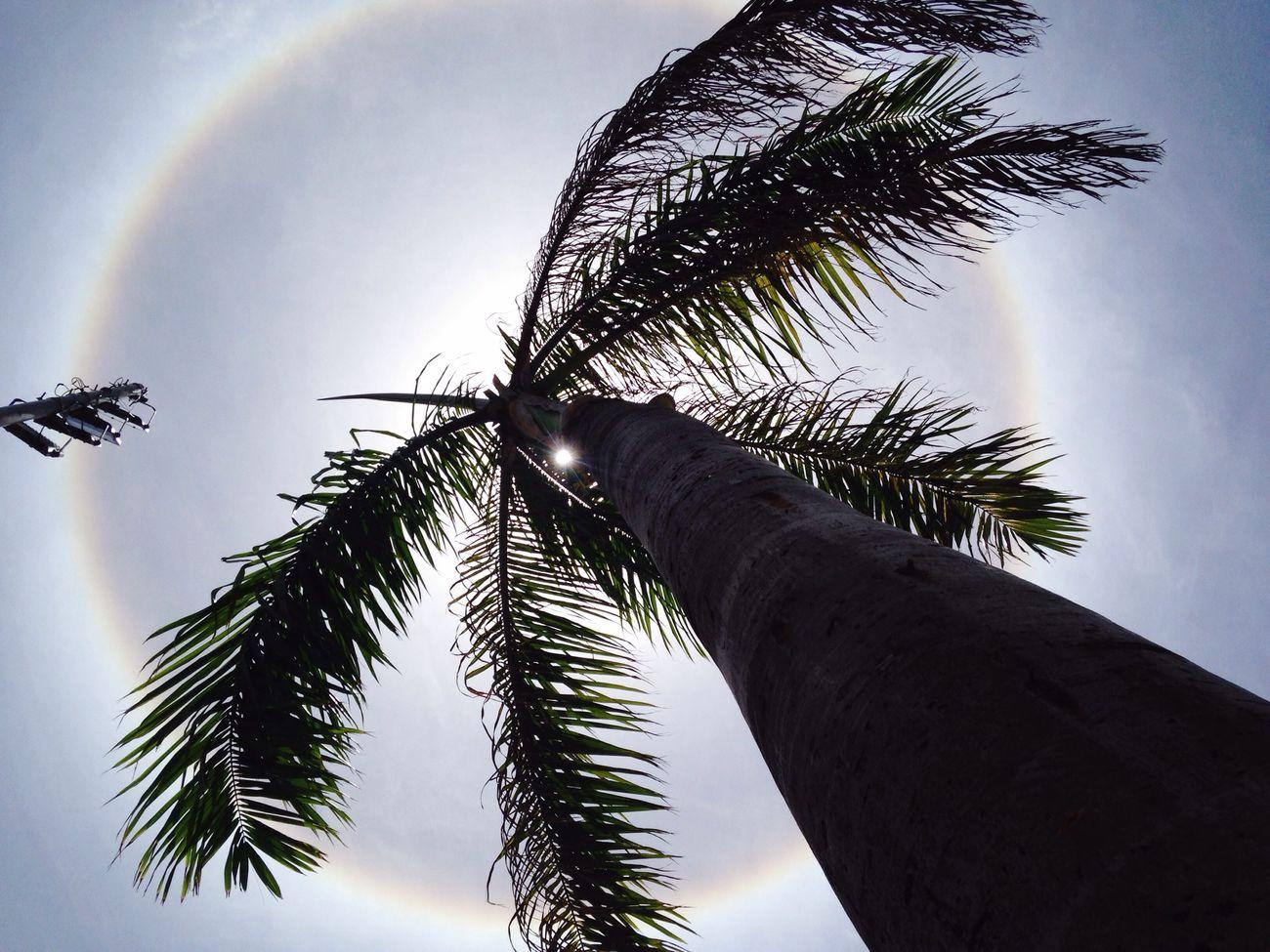 Halo Solar! Halo Recife Meulugar FenômenoAtmosférico Geografia VemComSol