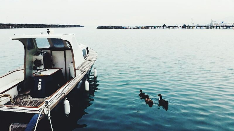 ~Lovely place ~ 🆒🌊😍✌Sea View Boats⛵️ DUCKS :) Rest In Peace Travel Photography Bluesea Enjoy Life
