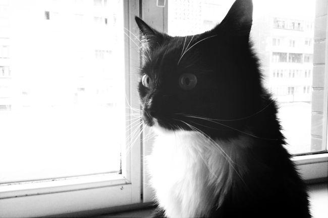 Cat Blackandwhite Keksas
