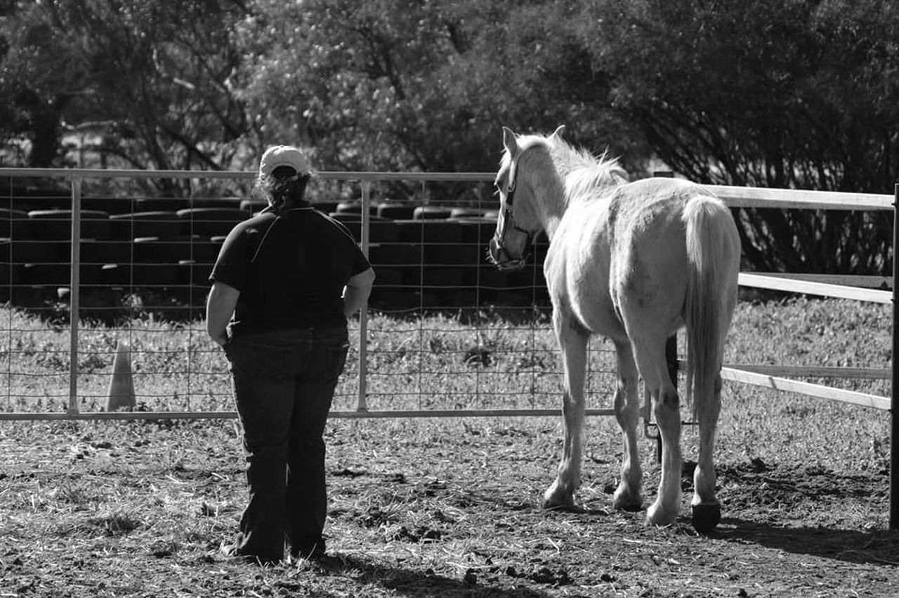 Rescued Rescue Horses Blackandwhite B&w Livestock Horse Rear View One Person One Animal Equestrianphotography Equestrianlife Equine Equestrian Fragility Animals In The Wild Equinephotography Equine Photography Animal Themes Animal Wildlife Horse Mane Wild Wild Horses Brumby Brumbies Mammal