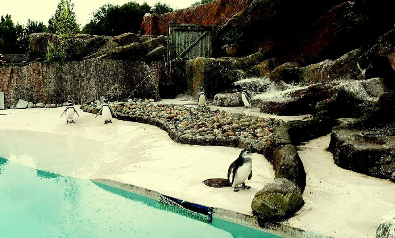 Water Swimming Pool Day Nature No People Outdoors Tree Eyeemvision Eyeem Photography EyeEm Best Shots Penguins Blackpoolzoo