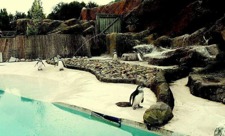 Water Swimming Pool Day Nature No People Outdoors Tree Eyeemvision Eyeem Photography EyeEm Best Shots Penguins Blackpoolzoo