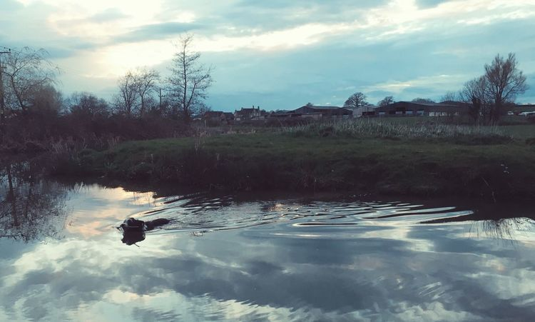 Water Dogswimming Dog Collie Beardedcollie Wiltshire
